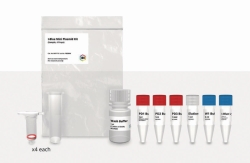 Plasmid Purification-Kits I-Blue Mini / Midi